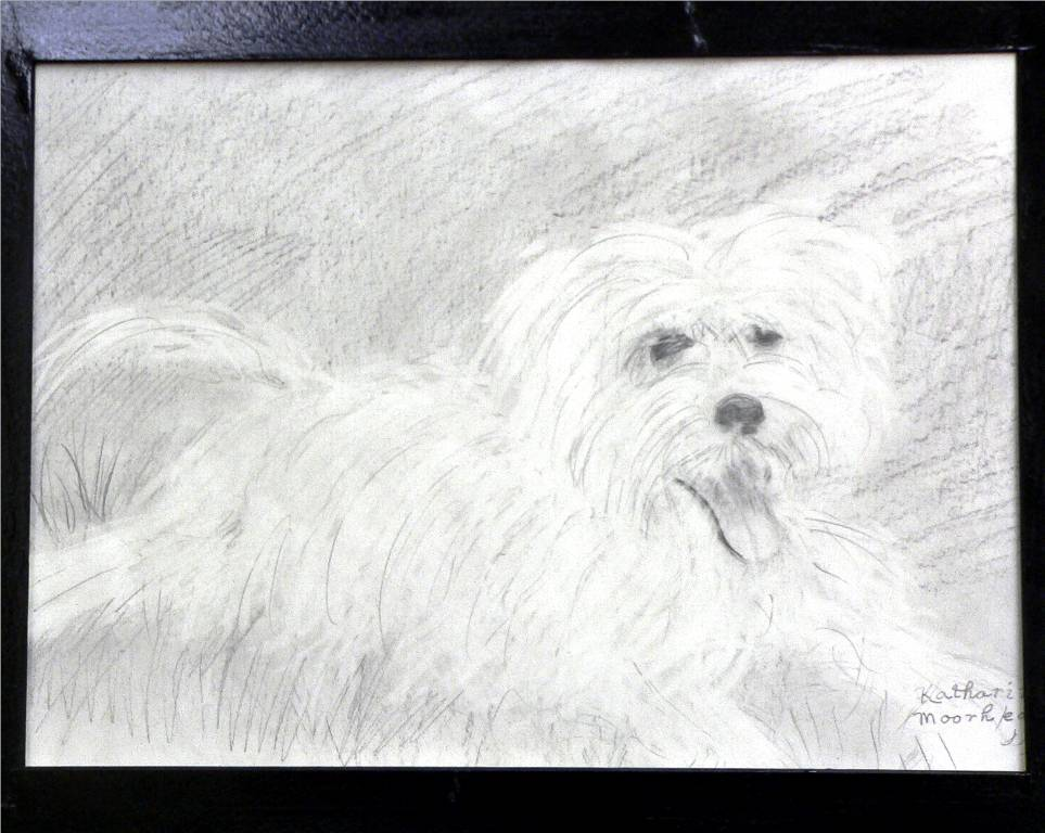 'Fluffy Pooch', a pencil sketch by Katherine Moorehead, at Creations Accessible Art Gallery, the Mental Health Association of Northwestern PA